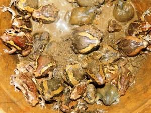 Món ếch òn độc đáo của người Chăm