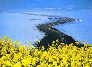 Vùng biển tự tách đôi ở Hàn Quốc